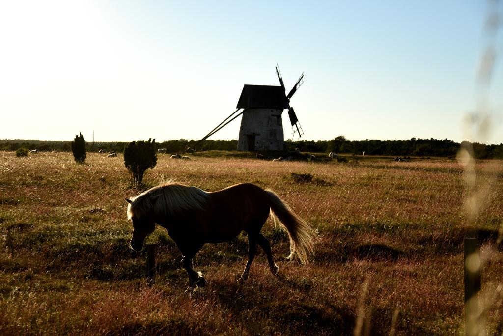 Häst på Sudret
