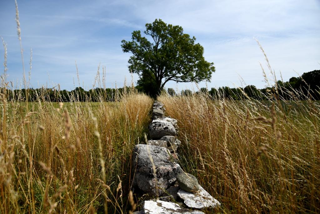 Gotland vast